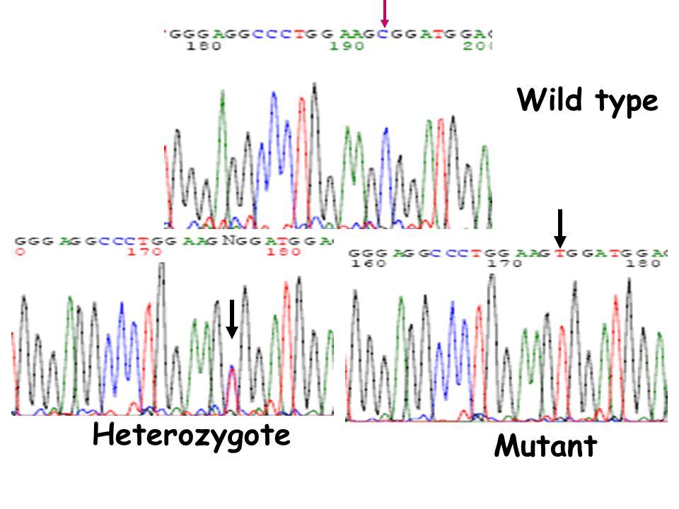 Wild type Heterozygote Mutant