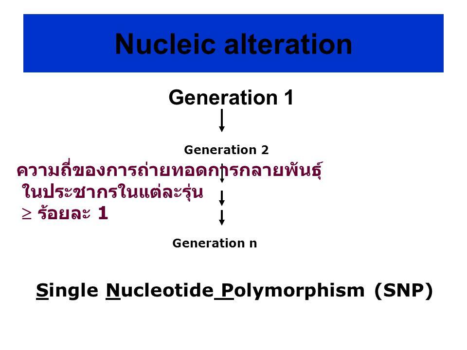 Generation 1 Single Nucleotide Polymorphism (SNP) Generation 2 Generation n ความถี่ของการถ่ายทอดการกลายพันธุ์ ในประชากรในแต่ละรุ่น  ร้อยละ 1 Nucleic