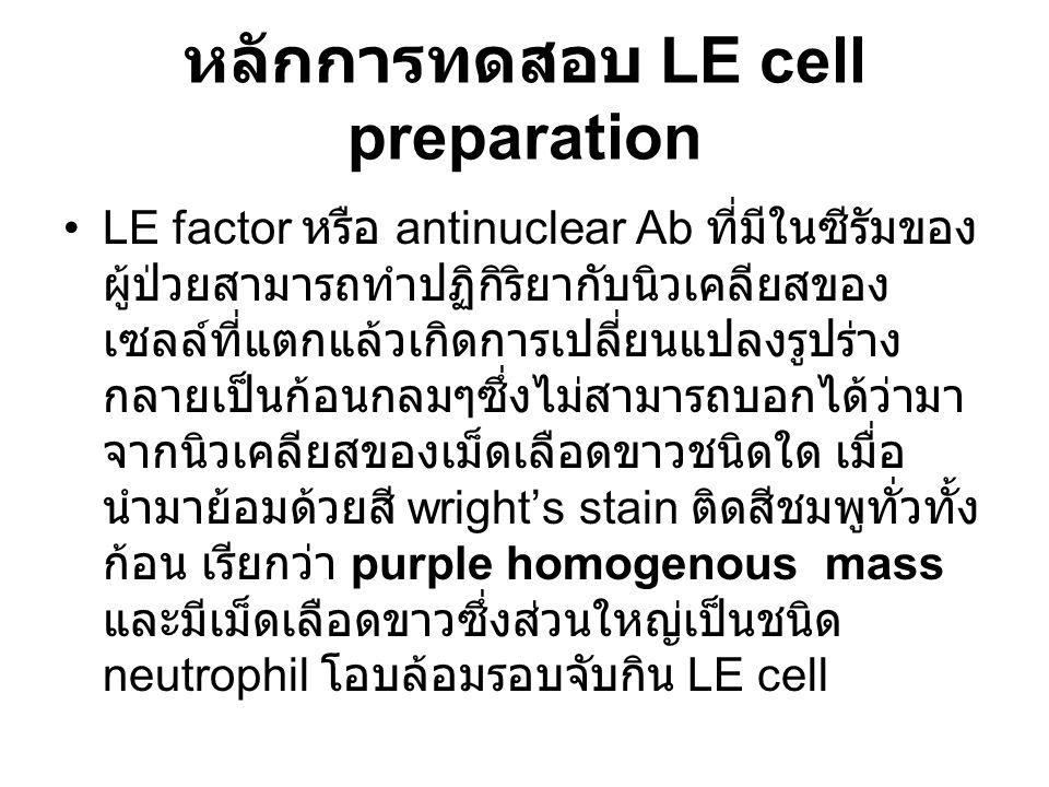 หลักการทดสอบ LE cell preparation LE factor หรือ antinuclear Ab ที่มีในซีรัมของ ผู้ป่วยสามารถทำปฏิกิริยากับนิวเคลียสของ เซลล์ที่แตกแล้วเกิดการเปลี่ยนแปลงรูปร่าง กลายเป็นก้อนกลมๆซึ่งไม่สามารถบอกได้ว่ามา จากนิวเคลียสของเม็ดเลือดขาวชนิดใด เมื่อ นำมาย้อมด้วยสี wright's stain ติดสีชมพูทั่วทั้ง ก้อน เรียกว่า purple homogenous mass และมีเม็ดเลือดขาวซึ่งส่วนใหญ่เป็นชนิด neutrophil โอบล้อมรอบจับกิน LE cell