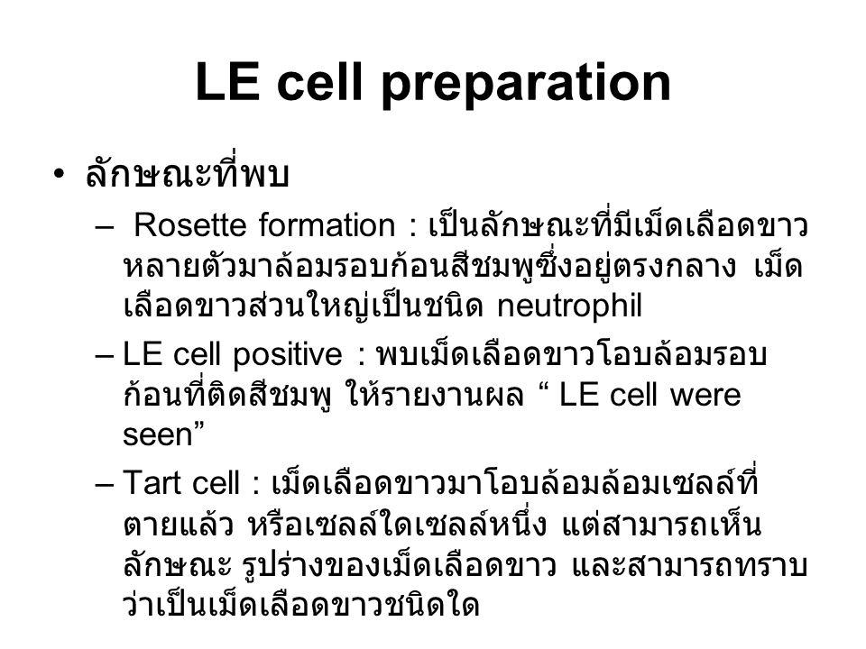 LE cell preparation ลักษณะที่พบ – Rosette formation : เป็นลักษณะที่มีเม็ดเลือดขาว หลายตัวมาล้อมรอบก้อนสีชมพูซึ่งอยู่ตรงกลาง เม็ด เลือดขาวส่วนใหญ่เป็นชนิด neutrophil –LE cell positive : พบเม็ดเลือดขาวโอบล้อมรอบ ก้อนที่ติดสีชมพู ให้รายงานผล LE cell were seen –Tart cell : เม็ดเลือดขาวมาโอบล้อมล้อมเซลล์ที่ ตายแล้ว หรือเซลล์ใดเซลล์หนึ่ง แต่สามารถเห็น ลักษณะ รูปร่างของเม็ดเลือดขาว และสามารถทราบ ว่าเป็นเม็ดเลือดขาวชนิดใด