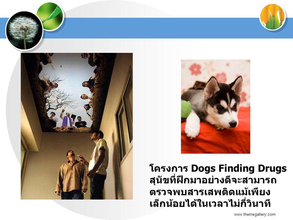 www.themegallery.com โครงการ Dogs Finding Drugs สุนัขที่ฝึกมาอย่างดีจะสามารถ ตรวจพบสารเสพติดแม้เพียง เล็กน้อยได้ในเวลาไม่กี่วินาที