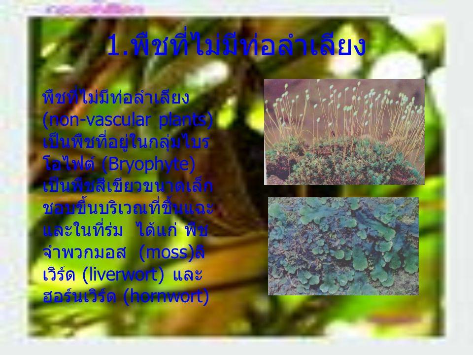1. พืชที่ไม่มีท่อลำเลียง พืชที่ไม่มีท่อลำเลียง (non-vascular plants) เป็นพืชที่อยู่ในกลุ่มไบร โอไฟต์ (Bryophyte) เป็นพืชสีเขียวขนาดเล็ก ชอบขึ้นบริเวณท