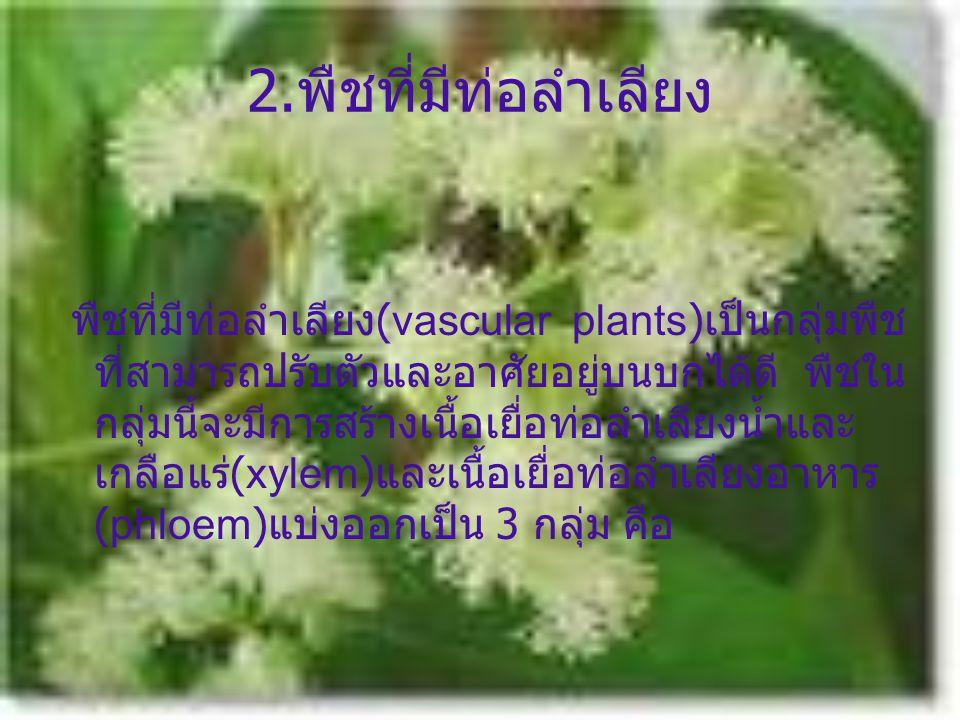 2. พืชที่มีท่อลำเลียง พืชที่มีท่อลำเลียง (vascular plants) เป็นกลุ่มพืช ที่สามารถปรับตัวและอาศัยอยู่บนบกได้ดี พืชใน กลุ่มนี้จะมีการสร้างเนื้อเยื่อท่อล
