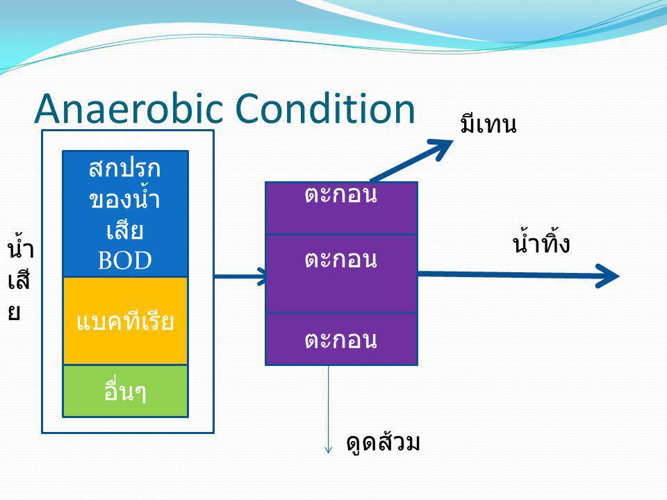 Anaerobic Condition ความ สกปรก ของน้ำ เสีย BOD COD แบคทีเรีย น้ำ เสี ย ถังบำบัดแบบ ปิด ไม่ให้มี อากาศ อื่นๆ น้ำทิ้ง มีเทน ตะกอน ดูดส้วม