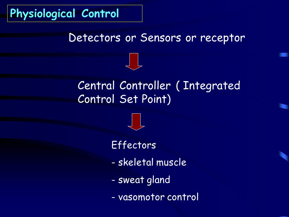 Detectors or Sensors or receptor Central Controller ( Integrated Control Set Point) Effectors - skeletal muscle - sweat gland - vasomotor control Physiological Control