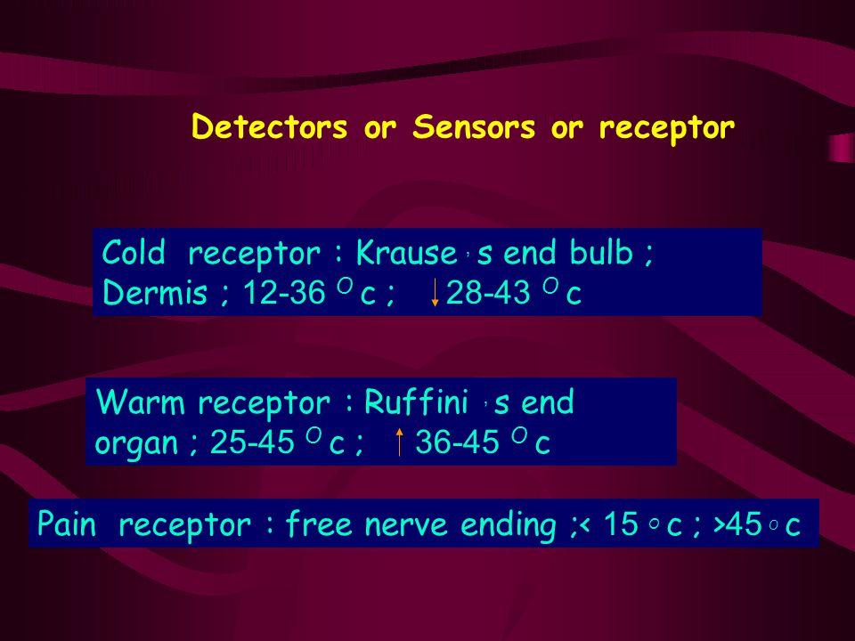 Detectors or Sensors or receptor Cold receptor : Krause, s end bulb ; Dermis ; 12-36 O c ; 28-43 O c Warm receptor : Ruffini, s end organ ; 25-45 O c
