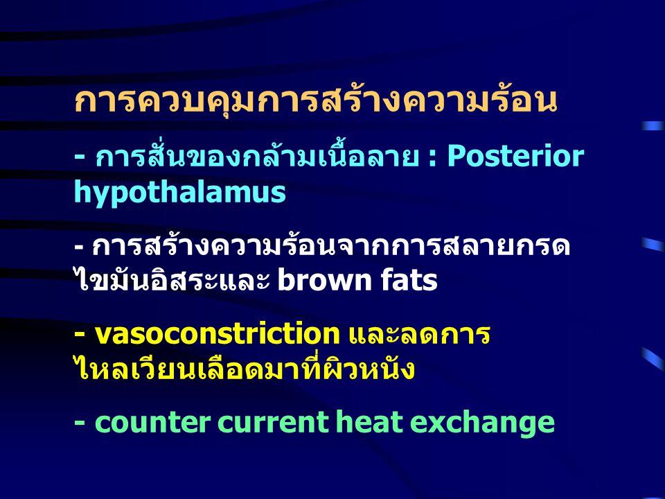 การควบคุมการสร้างความร้อน - การสั่นของกล้ามเนื้อลาย : Posterior hypothalamus - การสร้างความร้อนจากการสลายกรด ไขมันอิสระและ brown fats - vasoconstricti