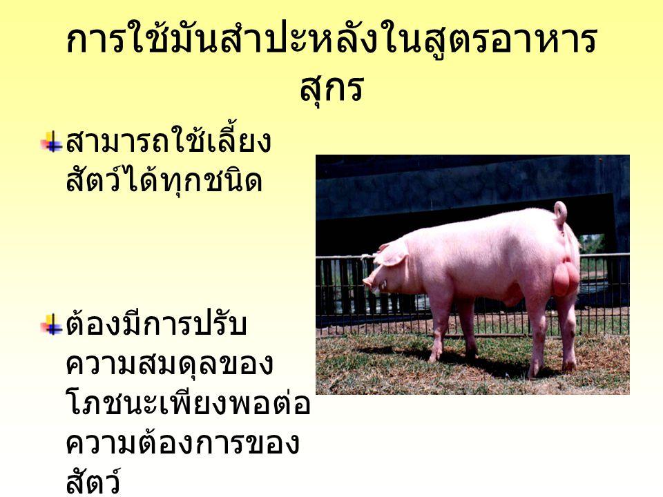 การใช้มันสำปะหลังในสูตรอาหาร สุกร สามารถใช้เลี้ยง สัตว์ได้ทุกชนิด ต้องมีการปรับ ความสมดุลของ โภชนะเพียงพอต่อ ความต้องการของ สัตว์