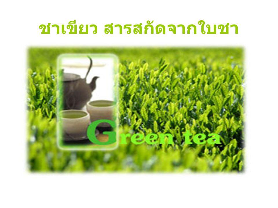 ทำความรู้จักกับชาเขียว ชื่อทั่วไป : ชาเขียว ชื่อทางวิทยาศาสตร์ : Camellia sinensis ชื่อสามัญ : Green Tea, Black Tea, Chinese Tea ส่วนที่ใช้ : ใบ ลำต้น ดอกตูมหรือยอด ชาที่นิยมดื่มในปัจจุบันแบ่งได้เป็น 3 ชนิด ใหญ่ ๆ ชาดำ (black tea) ชาอูหลง (oolong) ชาเขียว (green tea)