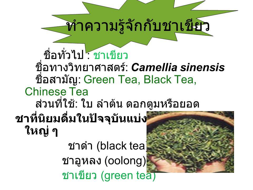 ทำความรู้จักกับชาเขียว ชื่อทั่วไป : ชาเขียว ชื่อทางวิทยาศาสตร์ : Camellia sinensis ชื่อสามัญ : Green Tea, Black Tea, Chinese Tea ส่วนที่ใช้ : ใบ ลำต้น