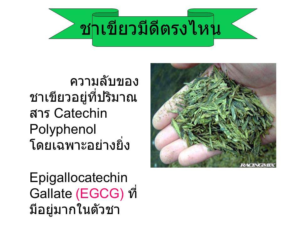 ชาเขียวมีดีตรงไหน ความลับของ ชาเขียวอยู่ที่ปริมาณ สาร Catechin Polyphenol โดยเฉพาะอย่างยิ่ง Epigallocatechin Gallate (EGCG) ที่ มีอยู่มากในตัวชา