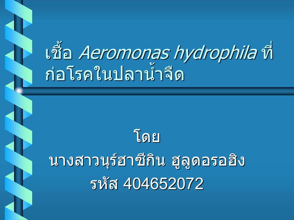 เชื้อ Aeromonas hydrophila ที่ ก่อโรคในปลาน้ำจืด โดย นางสาวนุร์ฮาซีกิน ฮูลูดอรอฮิง รหัส 404652072