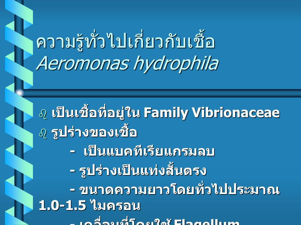 ความรู้ทั่วไปเกี่ยวกับเชื้อ Aeromonas hydrophila  เป็นเชื้อที่อยู่ใน Family Vibrionaceae  รูปร่างของเชื้อ - เป็นแบคทีเรียแกรมลบ - เป็นแบคทีเรียแกรมลบ - รูปร่างเป็นแท่งสั้นตรง - รูปร่างเป็นแท่งสั้นตรง - ขนาดความยาวโดยทั่วไปประมาณ 1.0-1.5 ไมครอน - ขนาดความยาวโดยทั่วไปประมาณ 1.0-1.5 ไมครอน - เคลื่อนที่โดยใช้ Flagellum - เคลื่อนที่โดยใช้ Flagellum