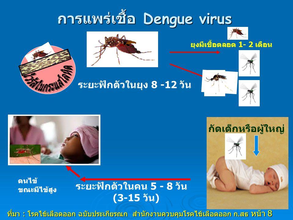 การแพร่เชื้อ Dengue virus ยุงมีเชื้อตลอด 1- 2 เดือน ระยะฟักตัวในยุง 8 -12 วัน ระยะฟักตัวในคน 5 - 8 วัน (3-15 วัน) คนไข้ ขณะมีไข้สูง ที่มา : โรคไข้เลือดออก ฉบับประเกียรณก สำนักงานควบคุมโรคไข้เลือดออก ก.สธ หน้า 8 กัดเด็กหรือผู้ใหญ่