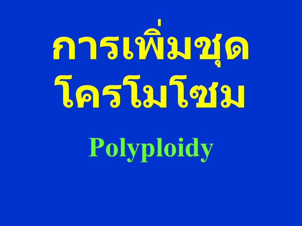 การเพิ่มชุด โครโมโซม Polyploidy