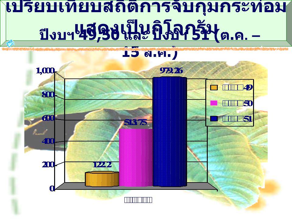 เปรียบเทียบสถิติการจับกุมกระท่อม แสดงเป็นกิโลกรัม ปีงบฯ 49,50 และ ปีงบฯ 51 ( ต. ค. – 15 ส. ค.)