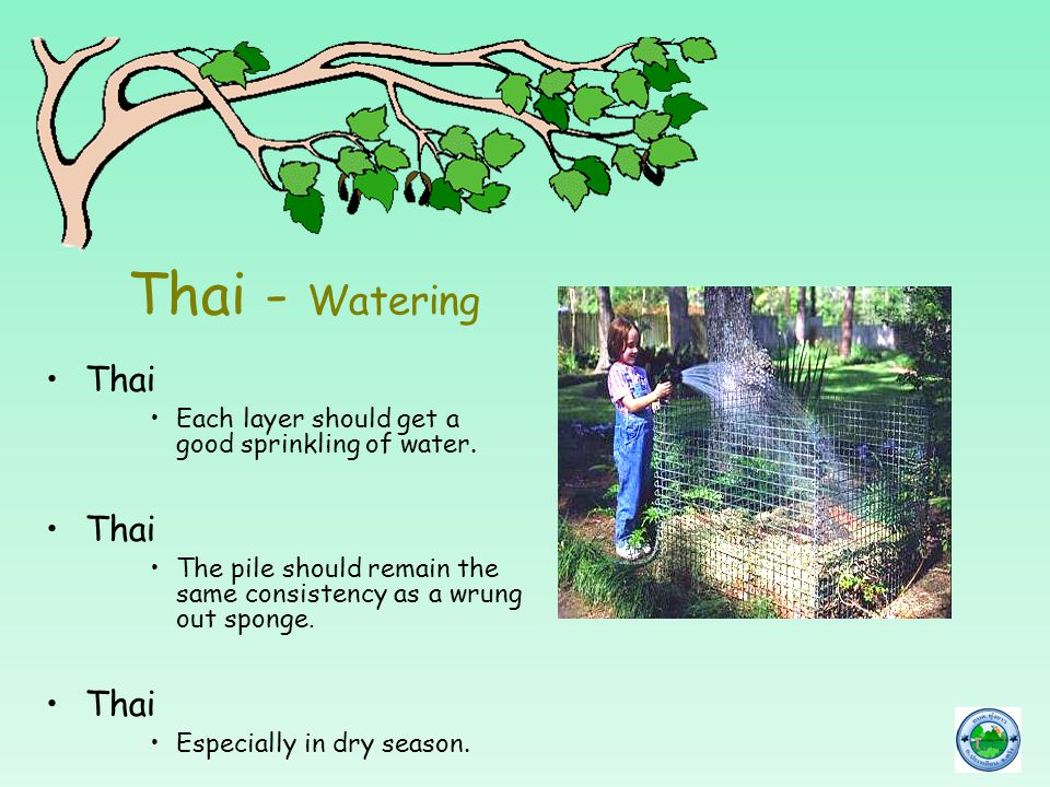 Thai - Watering Thai Each layer should get a good sprinkling of water. Thai The pile should remain the same consistency as a wrung out sponge. Thai Es