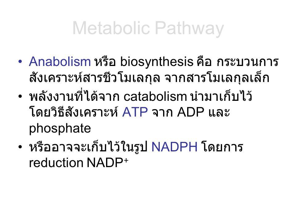 Metabolic Pathway Anabolism หรือ biosynthesis คือ กระบวนการ สังเคราะห์สารชีวโมเลกุล จากสารโมเลกุลเล็ก พลังงานที่ได้จาก catabolism นำมาเก็บไว้ โดยวิธีส
