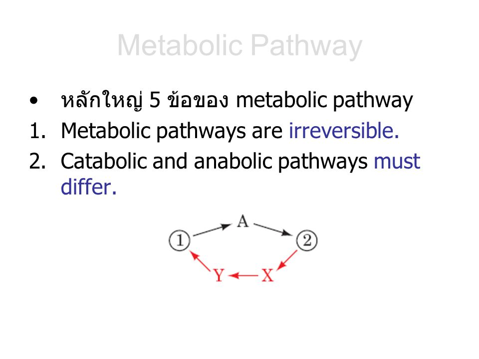 Metabolic Pathway หลักใหญ่ 5 ข้อของ metabolic pathway 1.Metabolic pathways are irreversible. 2.Catabolic and anabolic pathways must differ.