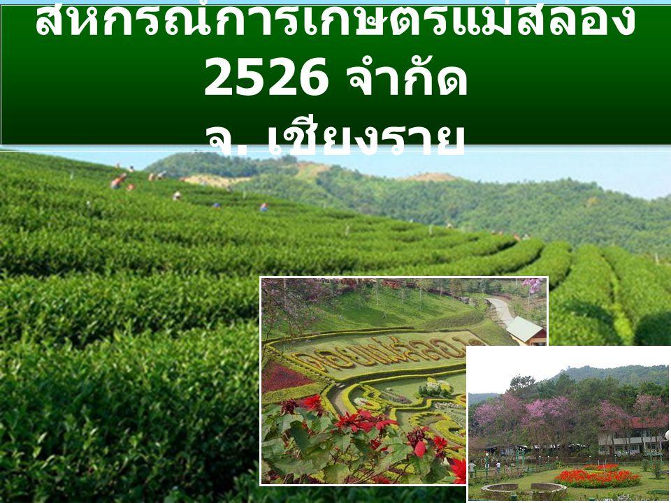 สหกรณ์การเกษตรแม่สลอง 2526 จำกัด จ. เชียงราย