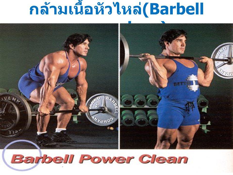 กล้ามเนื้อหัวไหล่ (Barbell power clean)