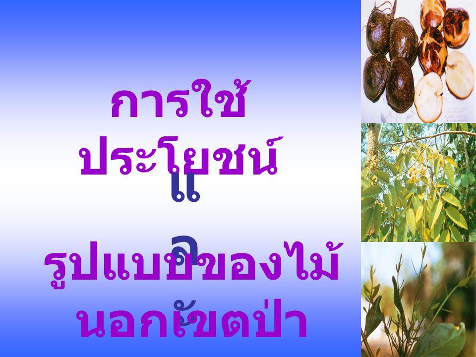 ตารางที่ 1 การใช้ประโยชน์และรูปแบบของพืช ที่มีเนื้อไม้ ชนิดการใช้ประโยชน์รูปแบบ เนื้ อ ไม้ อา หา ร ยานันท นา การ พลั ง งา น เกษ ตรกร รม อาหา รสัตว์ ร่ม เงา ไม้ ประดั บ ผืน เดีย ว แนว เส้น ตรง กระจัด กระจา ย ยางพารา ////// ตะเคียน ทอง ///////// มะพร้าว /////////// ขนุน //////// มะขาม //////// สะเดา เทียม /////// มะยม /////////// ปาล์ม ////////