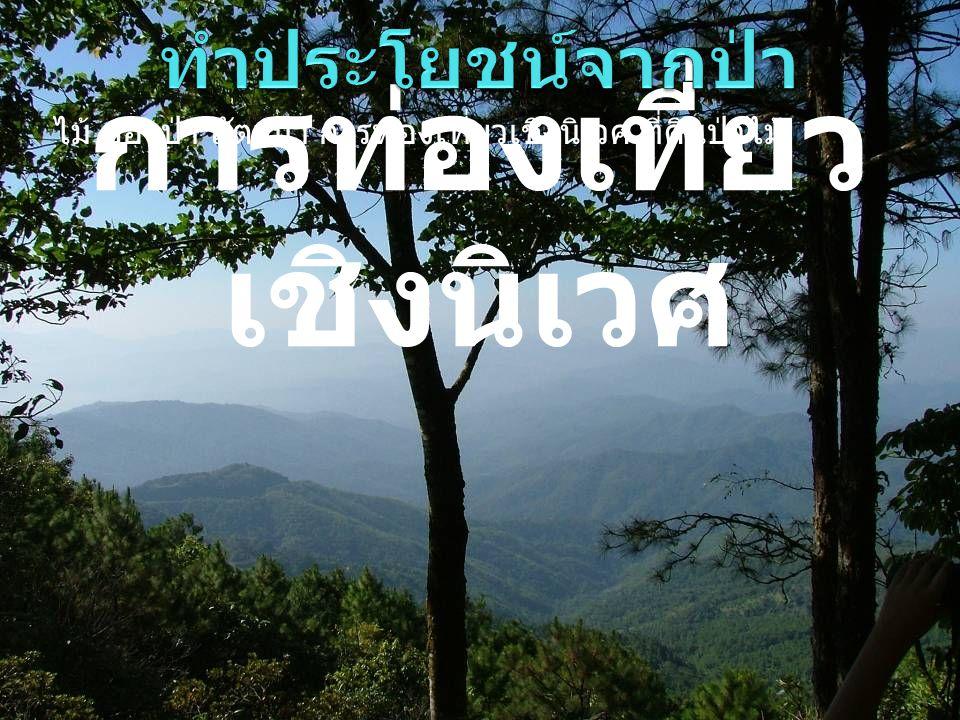 การท่องเที่ยว เชิงนิเวศ ไม้ ของป่า สัตว์ป่า การท่องเที่ยวเชิงนิเวศ ที่ดินป่าไม้