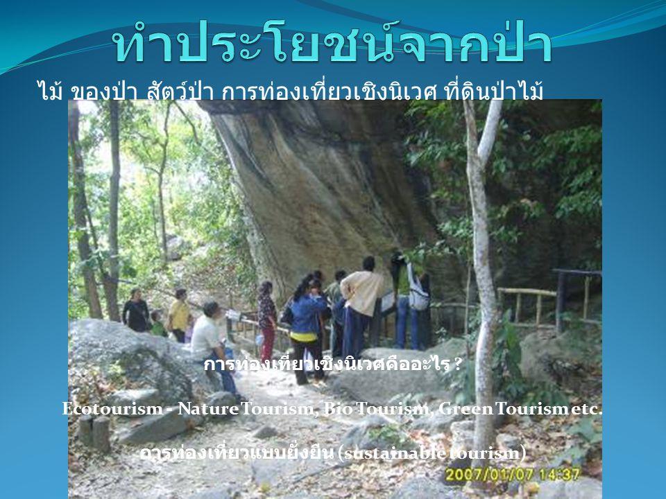 การท่องเที่ยวเชิงนิเวศคืออะไร ? Ecotourism - Nature Tourism, Bio Tourism, Green Tourism etc. การท่องเที่ยวแบบยั่งยืน (sustainable tourism) ไม้ ของป่า