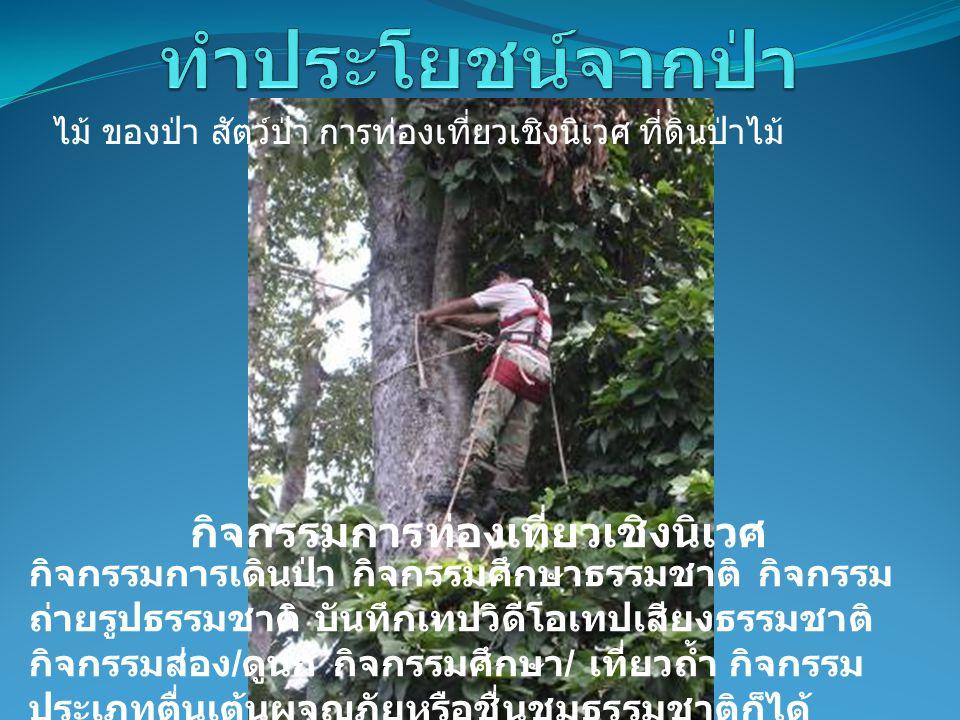 กิจกรรมการท่องเที่ยวเชิงนิเวศ กิจกรรมการเดินป่า กิจกรรมศึกษาธรรมชาติ กิจกรรม ถ่ายรูปธรรมชาติ บันทึกเทปวิดีโอเทปเสียงธรรมชาติ กิจกรรมส่อง / ดูนก กิจกรรมศึกษา / เที่ยวถ้ำ กิจกรรม ประเภทตื่นเต้นผจญภัยหรือชื่นชมธรรมชาติก็ได้ ไม้ ของป่า สัตว์ป่า การท่องเที่ยวเชิงนิเวศ ที่ดินป่าไม้
