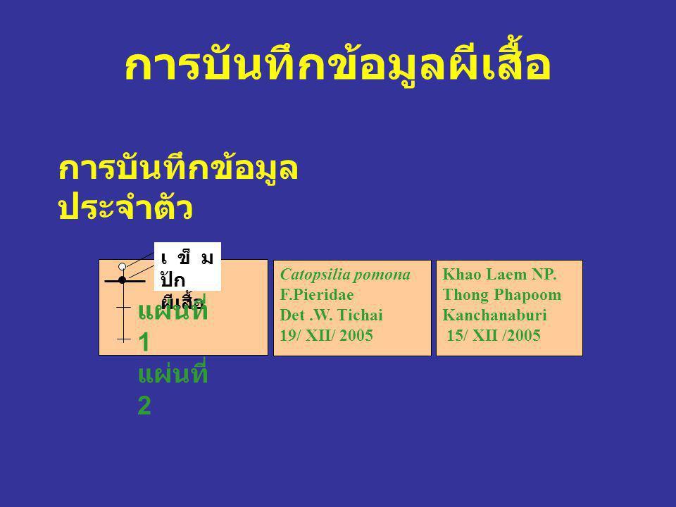 การบันทึกข้อมูลผีเสื้อ การบันทึกข้อมูล ประจำตัว เข็ม ปัก ผีเสื้อ Catopsilia pomona F.Pieridae Det.W. Tichai 19/ XII/ 2005 Khao Laem NP. Thong Phapoom
