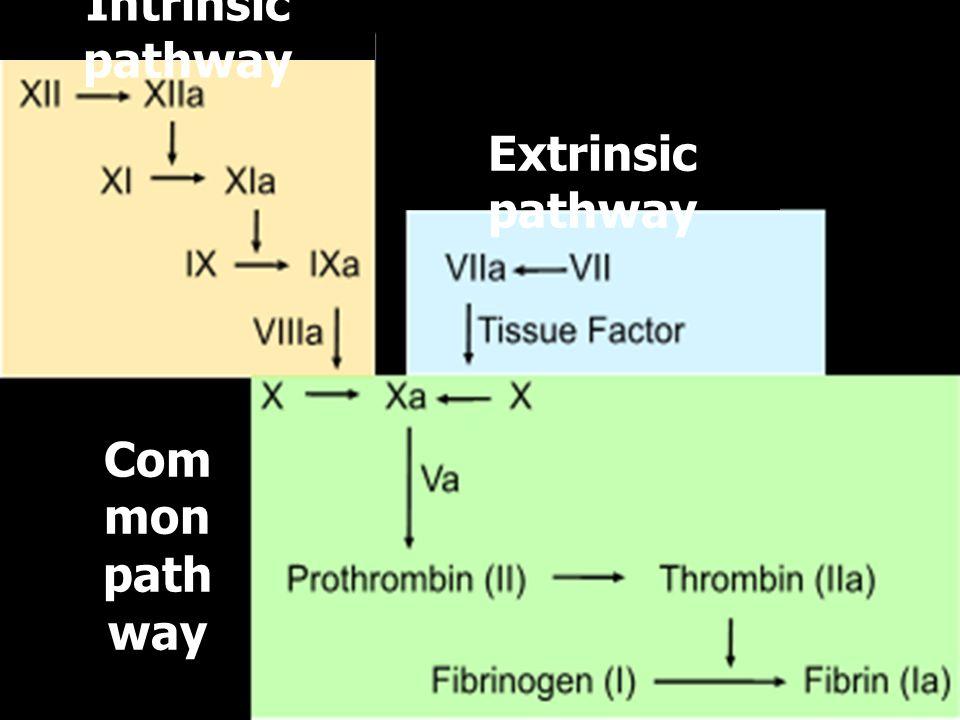 Extrinsic pathway Intrinsic pathway Com mon path way