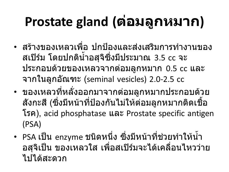 Prostate gland ( ต่อมลูกหมาก ) สร้างของเหลวเพื่อ ปกป้องและส่งเสริมการทำงานของ สเปิร์ม โดยปกติน้ำอสุจิซึ่งมีประมาณ 3.5 cc จะ ประกอบด้วยของเหลวจากต่อมลู