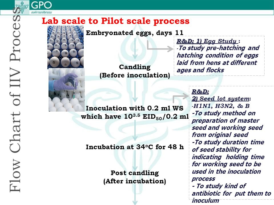 Lab scale to Pilot scale process Embryonated eggs, days 11 Candling (Before inoculation) Inoculation with 0.2 ml WS which have 10 3.5 EID 50 /0.2 ml I
