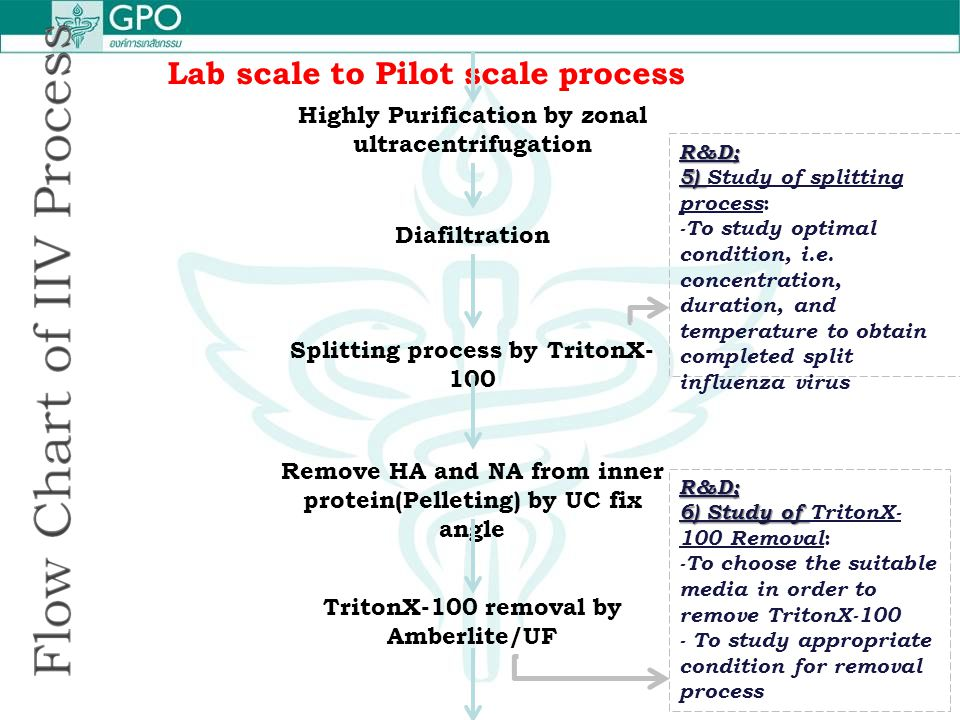 Lab scale to Pilot scale process Highly Purification by zonal ultracentrifugation Diafiltration Splitting process by TritonX- 100 Remove HA and NA fro