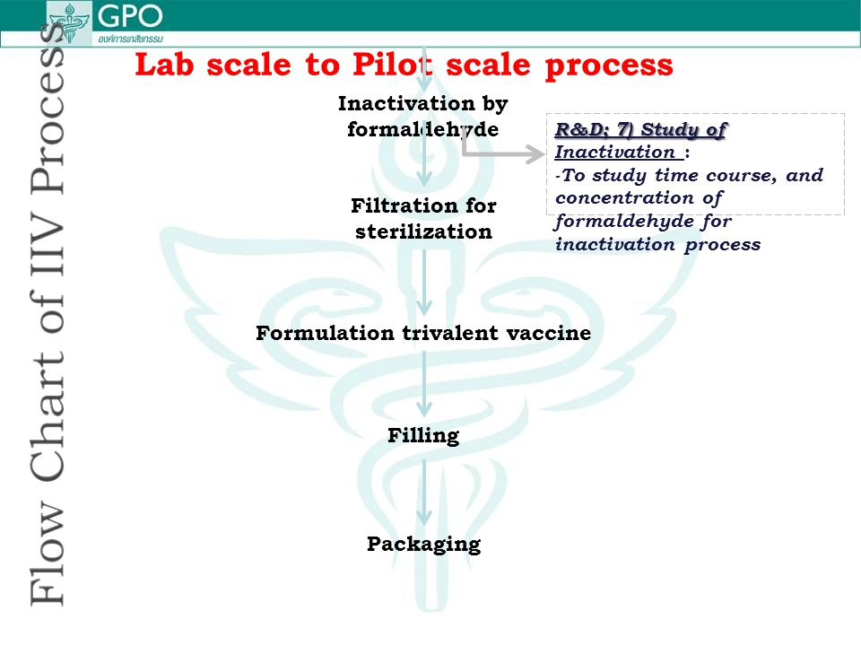 Lab scale to Pilot scale process Inactivation by formaldehyde Filtration for sterilization Formulation trivalent vaccine Filling Packaging R&D; 7) Stu