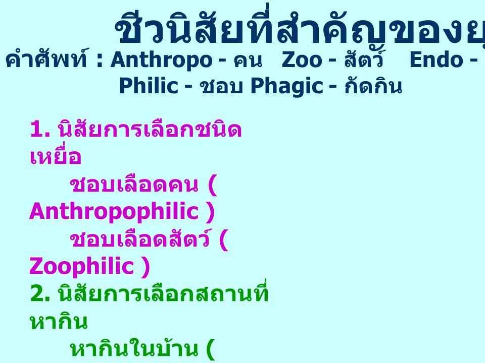แหล่งแพร่โรคเท้าช้างในประเทศไทย Endemic area Non Endemic area แม่ฮ่องสอน ลำพูน ตาก กาญจนบุรี ราชบุรี * ระนอง * สุราษฎร์ธานี กระบี่ นครศรีธรรมราช นราธิวาส