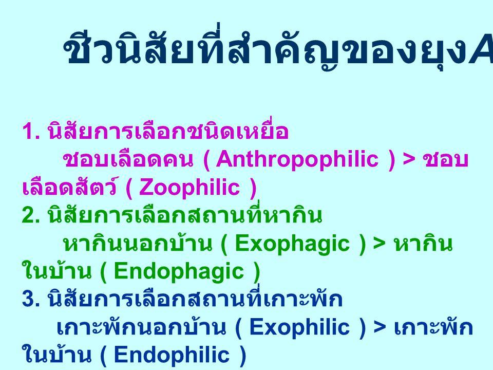 ชีวนิสัยที่สำคัญของยุง An.minimus 1. นิสัยการเลือกชนิดเหยื่อ ชอบเลือดคน ( Anthropophilic ) > ชอบ เลือดสัตว์ ( Zoophilic ) 2. นิสัยการเลือกสถานที่หากิน