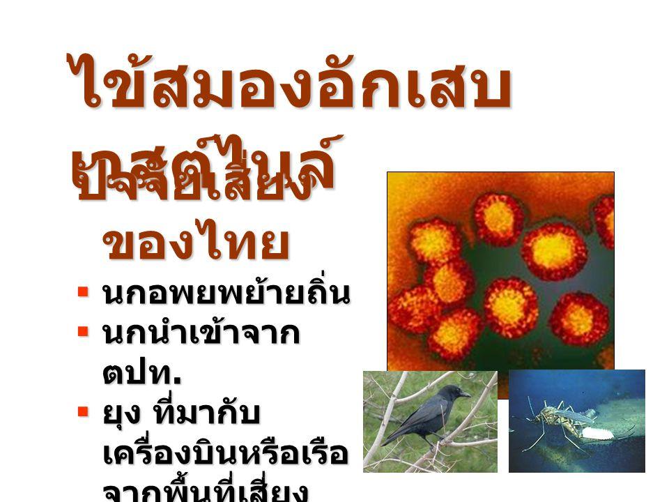 ไข้สมองอักเสบ เวสต์ไนล์ ปัจจัยเสี่ยง ของไทย  นกอพยพย้ายถิ่น  นกนำเข้าจาก ตปท.