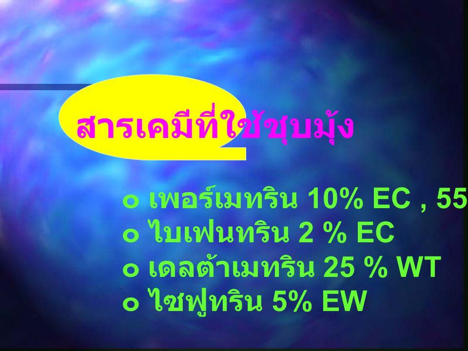 สารเคมีที่ใช้ชุบมุ้ง ๐ เพอร์เมทริน 10% EC, 55% EC ๐ ไบเฟนทริน 2 % EC ๐ เดลต้าเมทริน 25 % WT ๐ ไซฟูทริน 5% EW
