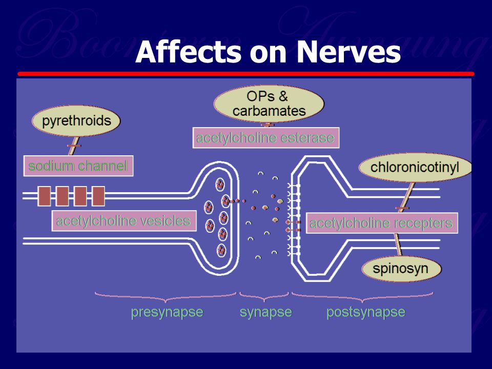 Affects on Nerves