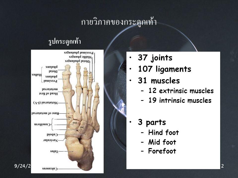 9/24/20142 กายวิภาคของกระดูกเท้า รูปกระดูกเท้า 37 joints 107 ligaments 31 muscles –12 extrinsic muscles –19 intrinsic muscles 3 parts –Hind foot –Mid