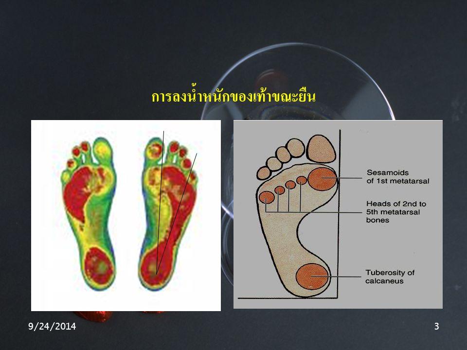 9/24/20143 การลงน้ำหนักของเท้าขณะยืน