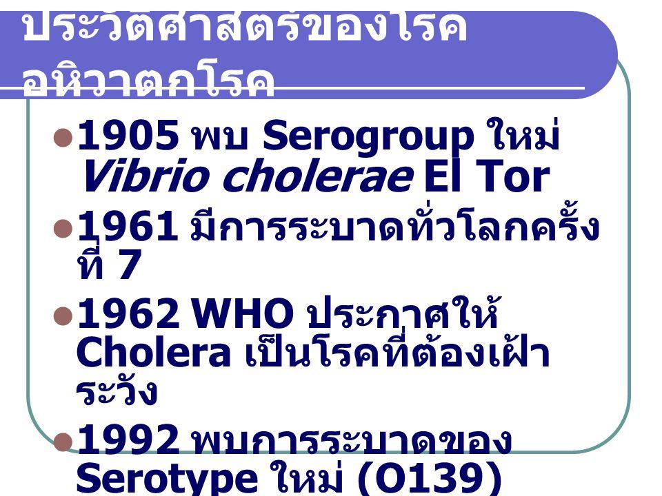 สาเหตุ Bacteria Vibrio cholerae ลักษณะ ; ติดสี gram negative Rod from ขนาดกว้าง 0.3-0.4 ไมครอน ยาว 1.5-2.0 ไมครอน มีหนวดยาว 1 เส้น (Flagella) ยาว 6.- 10.0 ไมครอน ผนังเซลล์ค่อนข้างบางขนาด 0.12 ไมครอน เยื่อชั้นนอกของผนัง เซลล์ประกอบด้วย lipoprotien