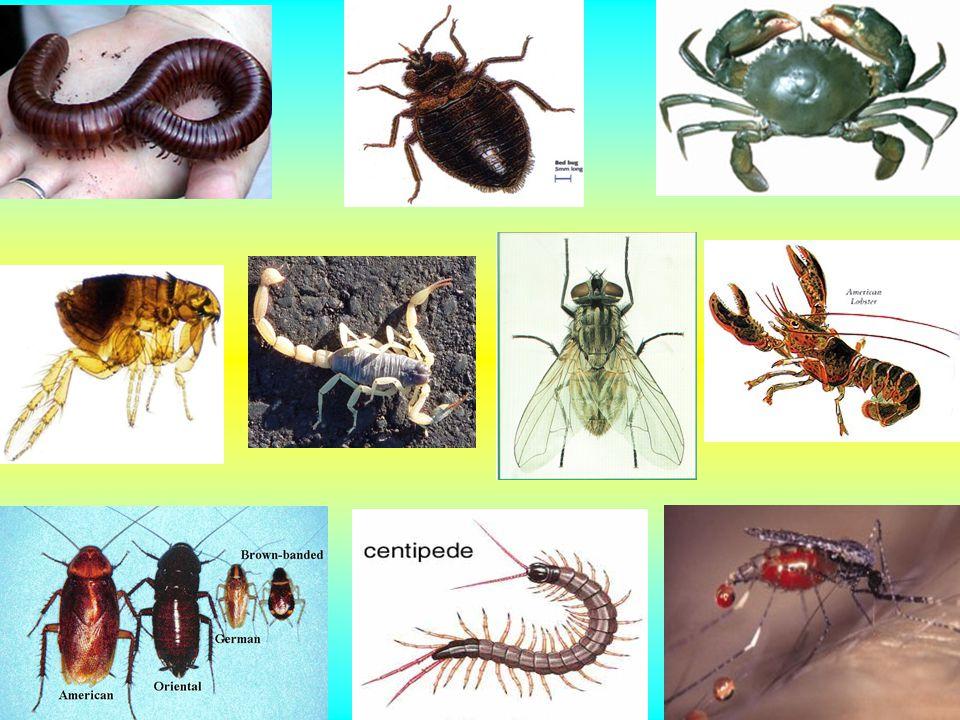 โรคที่นำโดยแมลงวัน 2. โรคจากแมลงวันที่ดูดกินเลือด โรคแอนแทรกซ์ โรคพยาธิใบไม้ในเลือดของสัตว์