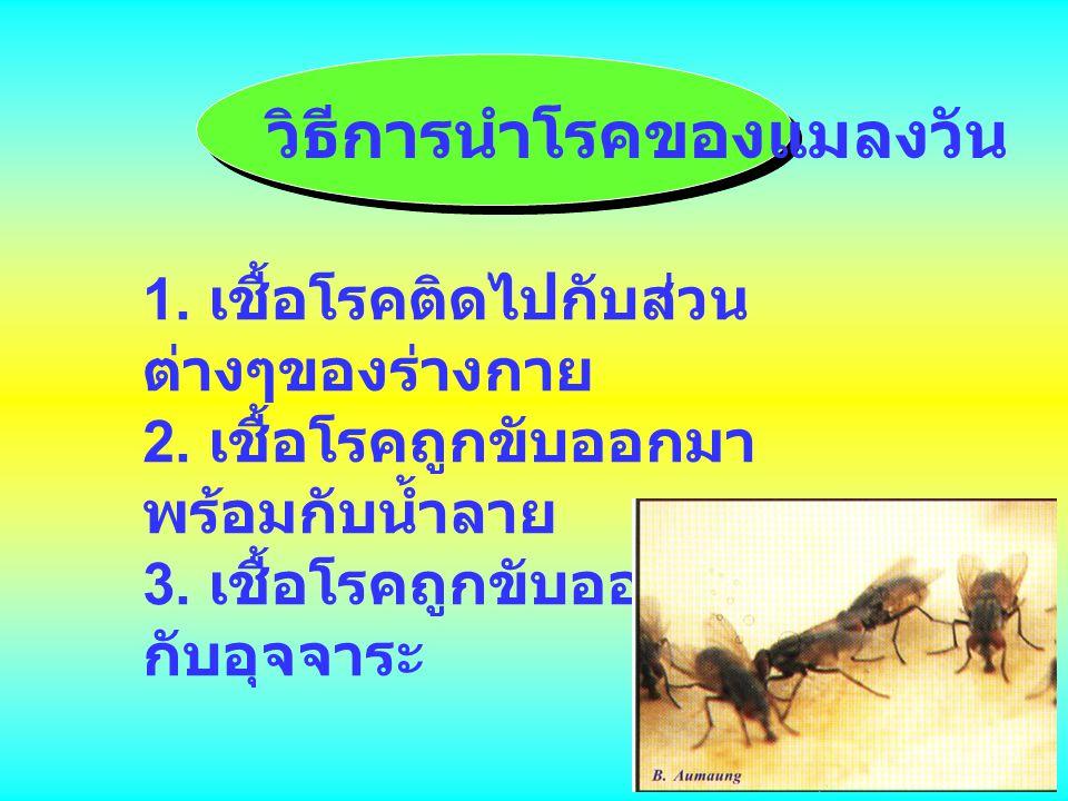 วิธีการนำโรคของแมลงวัน 1. เชื้อโรคติดไปกับส่วน ต่างๆของร่างกาย 2. เชื้อโรคถูกขับออกมา พร้อมกับน้ำลาย 3. เชื้อโรคถูกขับออกมา กับอุจจาระ