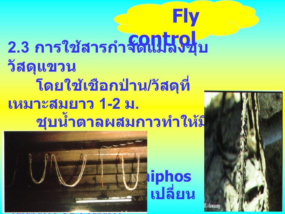 Fly control 2.3 การใช้สารกำจัดแมลงชุบ วัสดุแขวน โดยใช้เชือกป่าน / วัสดุที่ เหมาะสมยาว 1-2 ม. ชุบน้ำตาลผสมกาวทำให้มี สีดำผสมสารเคมี เช่น diazinon / fen