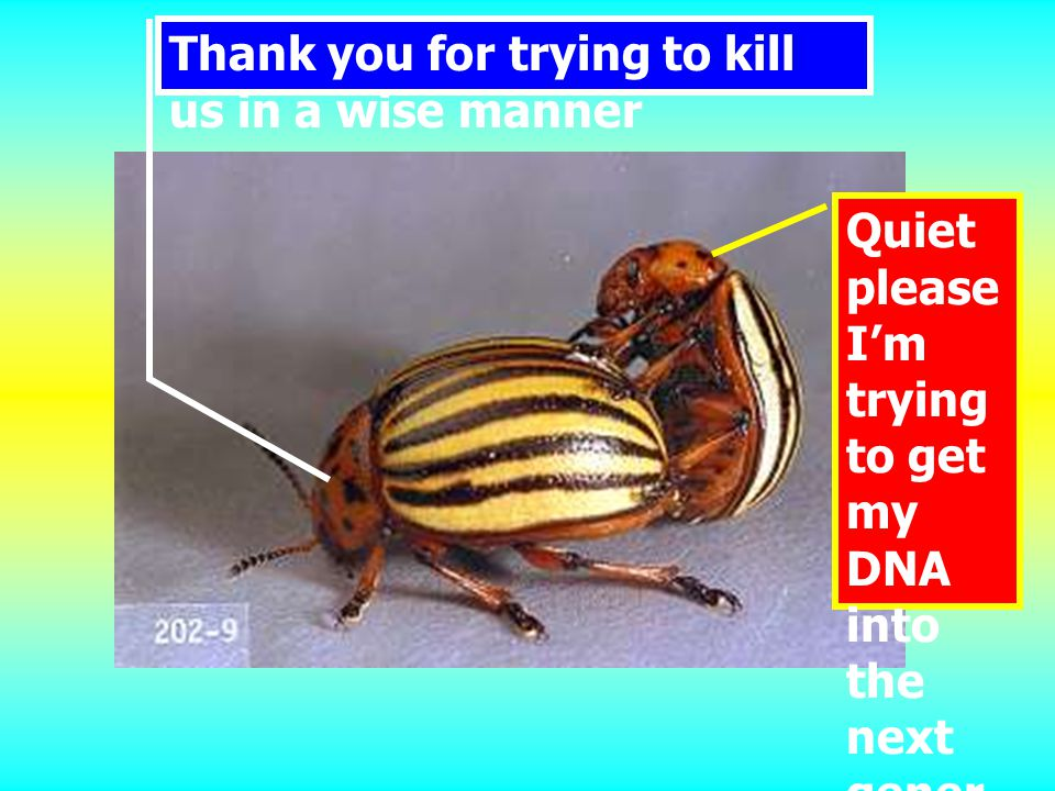 Quiet please I'm trying to get my DNA into the next gener ation Thank you for trying to kill us in a wise manner