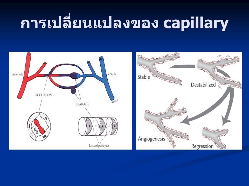 การเปลี่ยนแปลงของ capillary