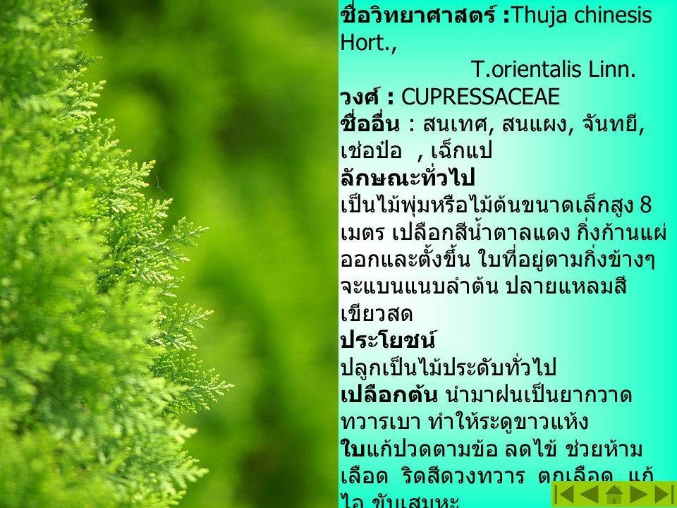 สนแผง ชื่อสามัญ : Oriental Arbor-Vitea ชื่อวิทยาศาสตร์ :Thuja chinesis Hort., T.orientalis Linn. วงศ์ : CUPRESSACEAE ชื่ออื่น : สนเทศ, สนแผง, จันทยี,