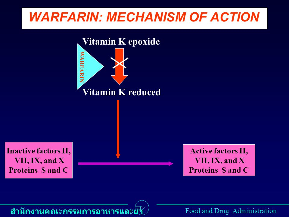 สำนักงานคณะกรรมการอาหารและยา Food and Drug Administration WARFARIN: MECHANISM OF ACTION Inactive factors II, VII, IX, and X Proteins S and C Active fa